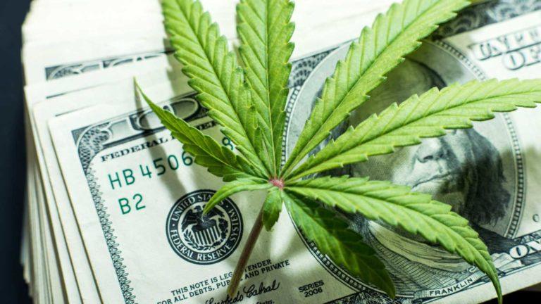 maconha medicinal cannabis canabis 3