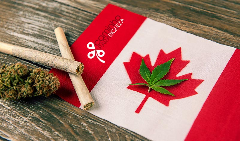 maconha medicinal cannabis canabis canada libera maconha