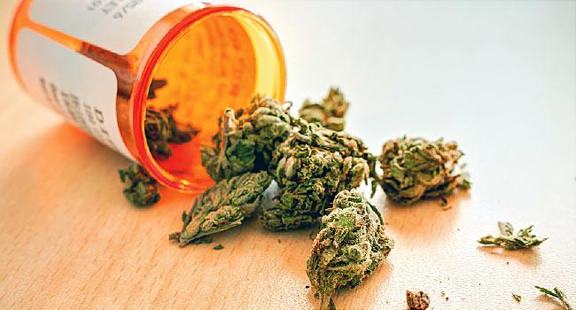 Maconha como remedio cannabis canabidiol investimentos